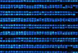 Sıfırlar, birler; organik bilgisayarlar ve bakterilerden üretilen LED'ler... Aynı şey.