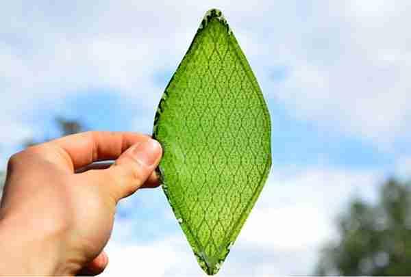 Yapay-yaprak-elektrik-ve-hidrojen-yakıtı-üretiyor