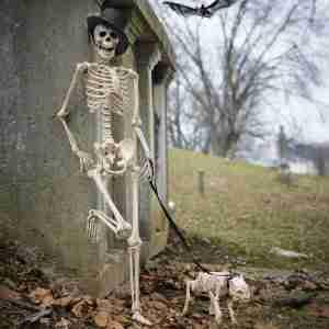 skeleton-dog-on-leash-3