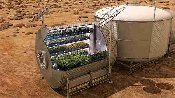 Mars'ta nasıl yaşayacak bitki 9