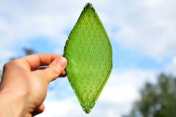 Bir yaprak 3B güneş paneline doğal örnektir.