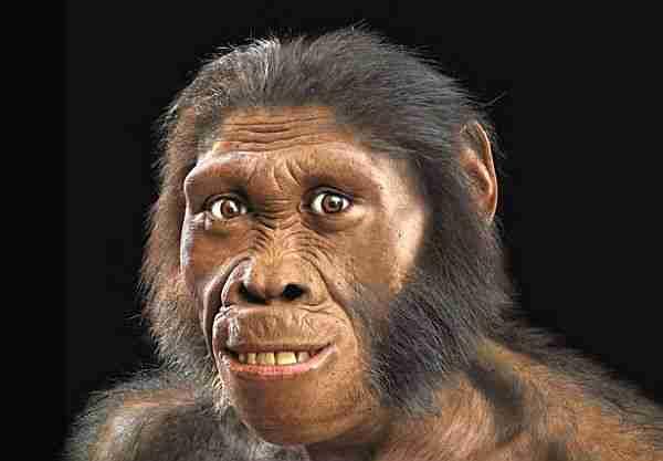evrim-insan-hominid-dik_yürüyen-lucy