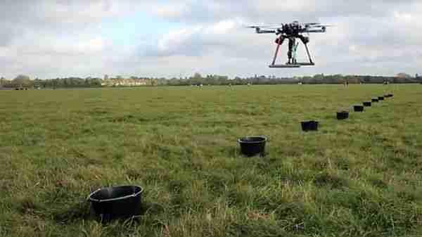 dronlar-ağaç-orman-palmiye_yağı-afrika