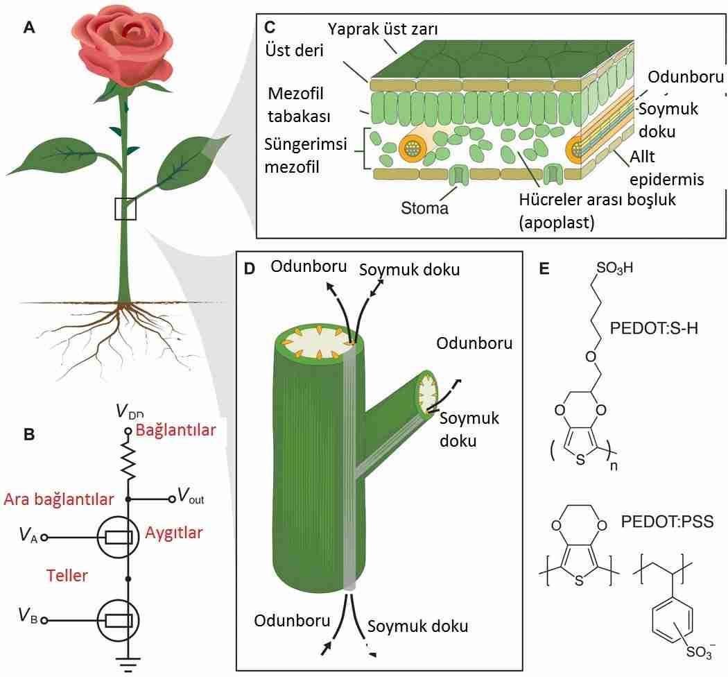 Biyonik-bitkiler-ve-laptop-şarj-eden-elektronik-güller