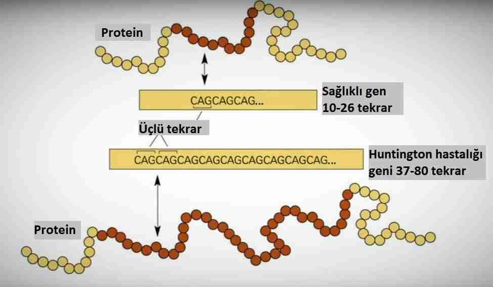 DNA-testi-yaparsanız-neler-öğrenirsiniz