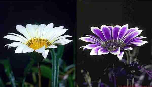 Floresan-hayvanlar-neden-ve-nasıl-ışık-saçıyor